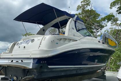 Charter Motorboat SUNDANCER SEA RAY 320 Miami