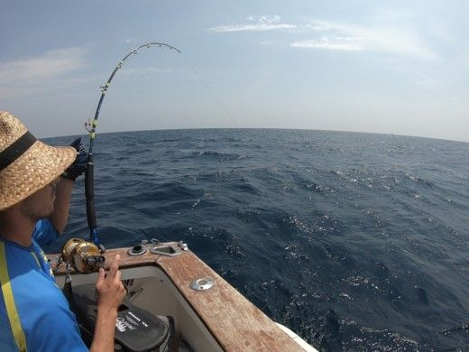 Fishing Cori Fisher 840 en Denia en alquiler