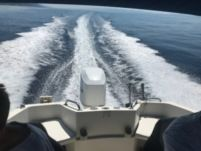 Motorboat Quicksilver Commander 635 for hire