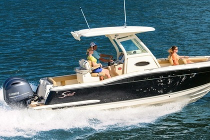 Hire Motorboat SCOUT 27 Naples