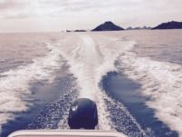 Sea Pro 186 Cc in Gustavia for hire