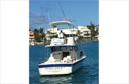 Motorboat Allman Sport Fisher 35 for hire
