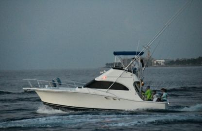 Rental Motorboat Luhrs 320 Tournament Palm Beach