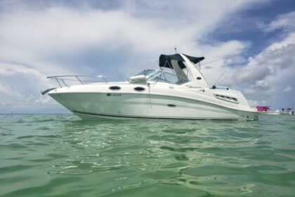 Rental Motorboat Sea Ray 260 Sundancer Tampa Bay