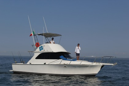 Rental Motorboat Bertram 38 Puerto Vallarta