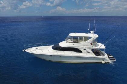 Hire Motor yacht Searay 55 Cozumel