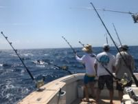 Donzi Sportfish in Fort Lauderdale for rental
