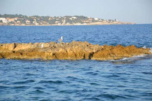 Liver Fisherman 25'' a Siracusa