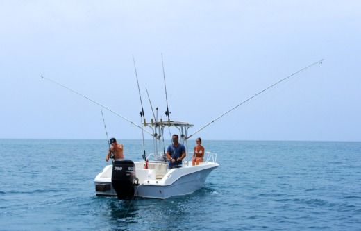 Angler Open 7 M  Fisher in Murdeira