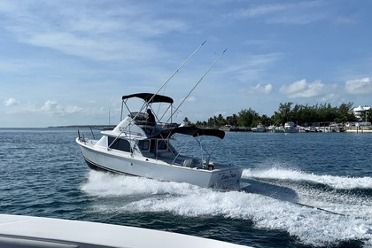 Hire Motorboat BERTRAM 31 Nassau