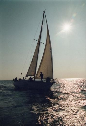 Sailboat Cnso Shogun