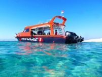 Red Whale Speedboat in Komodo for rental